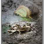 Фотография жизни на берегу р. Свияга.