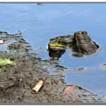 Фотография пока ещё живой природы. Берег р. Свияга.